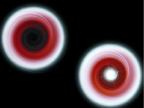 """Illustrations depict gas from a sun-like companion star being drawn in a swirling pattern into a black hole (top) and onto a neutron star (bottom). In both cases, as the gas nears the central object, strong gravitation weakens the light, making it appear redder and dimmer. When the gas strikes the solid surface of the neutron star, it glows brightly in x-rays. But after crossing the """"event horizon"""" of the black hole, it produces no x-rays, since a black hole has no surface."""