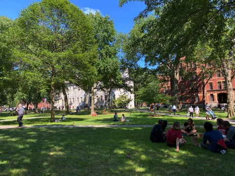 Students gather on the grass in Harvard yard