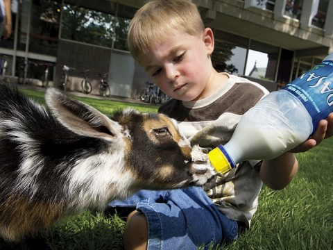 Landon Richard, age 4, feeds Cosmo, a one-month-old goat. Cosmo is on the staff of Animal Craze, a local traveling farm.