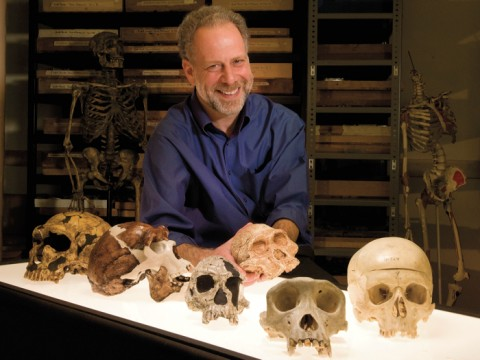"A skull session with human evolutionary biologist  Daniel Lieberman in the fossil room at the Peabody Museum.  Millions of years  of natural selection have shaped the human head. From left to right: a  Neanderthal; <i>Homo erectus; Homo habilis;  Australopithecus africanus; Pan troglodytes</i> (common chimpanzee);  <i>Homo sapiens</i> (human).  ""Gonzo,"" a Neanderthal skeleton, stands in the back."